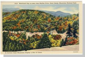 Smoky Mountains Nat'l Park,Postcard,NC/TN,NewfoundGap,Nr Mnt