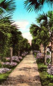 Florida Ormond Beach Walk From Fellowship Center To The Beach Handcolored Alb...