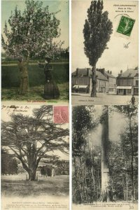 TREES ARBES COLLECTION 750 CPA Pre-1940 (L2411)