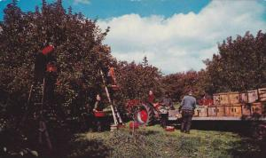 The Fall Apple Picking, Apple Trees, Partial View of an Orchard, Rougemont, Q...