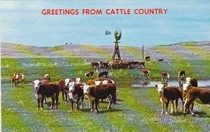 Greetings From Cattle Country Omaha Nebaska