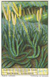 Liebig Trade Card s1693 Prehistoric Plants Still Surviving No 1 Wolfsklauwen