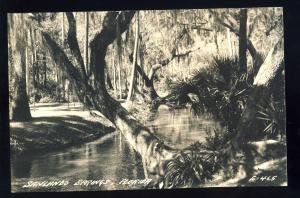 Sanlando Springs, Florida/FL Postcard, Trees Along Water, Glossy Photo Postcard