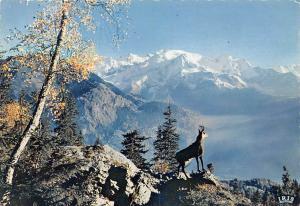 France Le Chamois des Alpes Goat Mountain Landscape