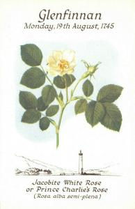 Art Postcard Flower, Jacobite White Rose, Glenfinnan by Bessie Darling Inglis 5U