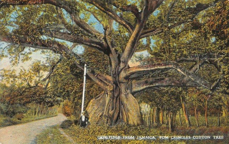 Tom Cringle's Cotton Tree JAMAICA Greetings c1910s Vintage Postcard