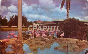 Old Postcard Flamingos at Hialeah Racetrack in Florida
