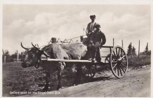 Oxcart Used On The Gaspe Coast Quebec Canada Real Photo