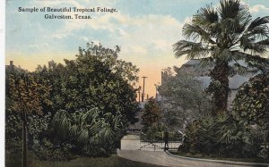 GALVESTON, Texas, 1900-1910's; Sample Of Beautiful Tropical Foliage