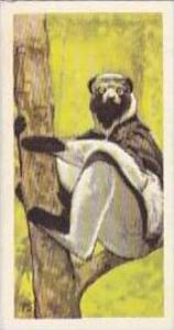 Brooke Bond Vintage Trade Card Wildlife In Danger 1963 No 5 Indri