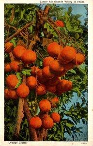 Texas Lower Rio Grande Valley Orange CLuster 1949 Curteich