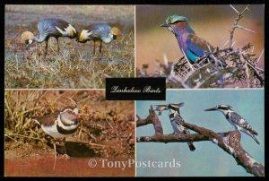Zimbabwe Birds