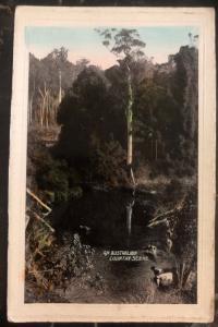 Mint Australia Picture Postcard PPC An Australian Country Scene