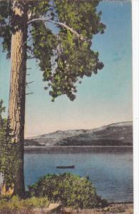 Idaho Payette Lakes Albertype