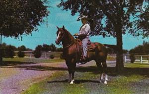 Texas Fort Worth Socks Five Champion Quarter Horse Loyd Jinkens R...