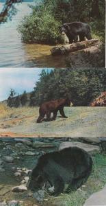 (3 cards) Black Bear Fishing - Eastern United State