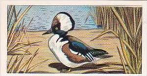 Glengettie Tea Trade Card Rare British Birds No 16 Hooded Merganser