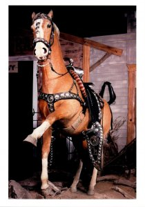 Califronia Roy Rogers' Horse Trigger