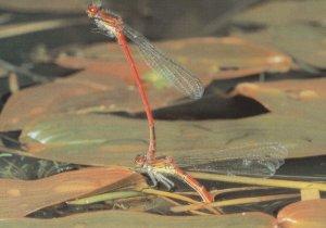 Dragonfly Doing Circus Handstand Award Photo Postcard