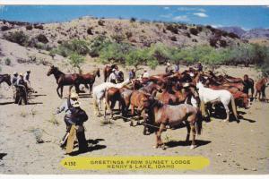 Cowboys, Horses, Greetings From Sunset Lodge, HENRY'S LAKE, Idaho, 40-60's
