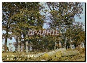 Postcard Modern Foret Troncais Allier Futaie Colbert