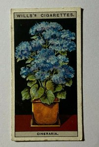 CIGARETTE CARD - WILLS FLOWERS IN POTS #17 STAR CINERARIA (UU506)