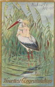 Stork With Baby On Back