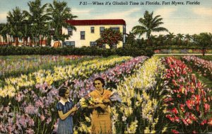 Florida Fort Myers When It's Gladiola Time In Florida Curteich