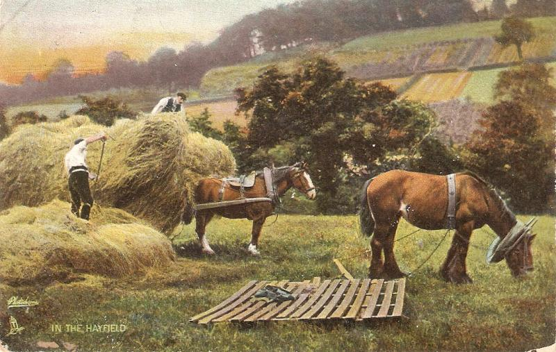 In the Hay Field. Horses Tuck Photochrome Country Life  PC #  4721