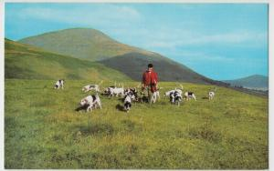 Social History; Blencathra Fox Hounds On Skiddaw PPC By Salmon, Unused, Hunting