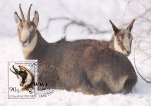 Chamois Deer Albenian WWF Stamp First Day Cover Postcard