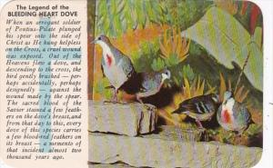 Birds The Legend Of The Bleeding Heart Dove