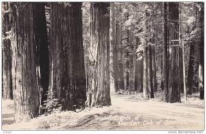 RP, Near Entrance Of Garden Club Of America, California, 1930-1950s