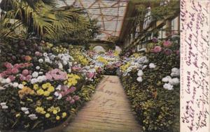 New York Bronx Park Chrysanthemum Display 1906