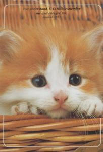 Sad Lonely Kitten Jeremiah Remember & Care For Me Bible Passage Cat Postcard