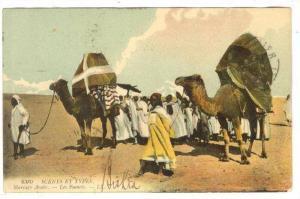 Arab Desert Marriage, Les Fiances, PU-1911,Algeria