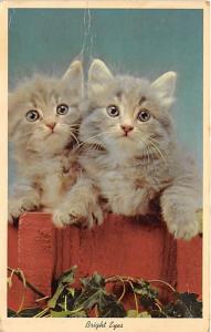 Cat Post Card Old Vintage Antique Bright Eyes 1965