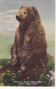 Grizzly Bear, Peninsula Giant Bear Group, Unimak Island, Alaska, PU-1952