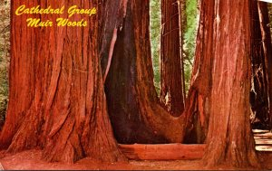 California Muir Woods Cathedral Group