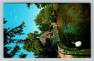 Cape Cod MA- Massachusetts, Dexter's Grist Mill, Shawme Pond, Chrome Postcard