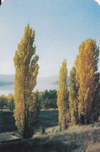 Autumn Tints, Beautiful Lake Kalamalka, Okanagan-Cariboo Trail, British Colum...