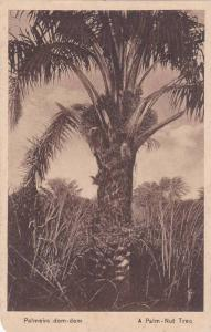 Palm-Nut Tree , Angola , 00-10s