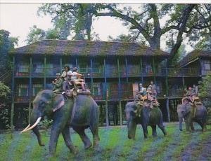Elephants At Tiger Tops Jungle Lodge Royal Chitwan National Park Nepal