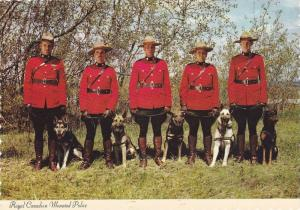 Royal Canadian Mounted Police with German Sheppard Police Dogs, Calgary, Albe...