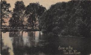 C97/ St Joseph Paw Paw River Michigan Mi Postcard 1908 Scene Cows
