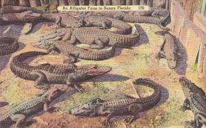 An Alligator Farm In Sunny Florida