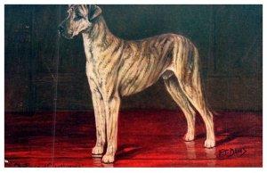 Dog , Great Dane , Chi Tiger of Cleathoypes