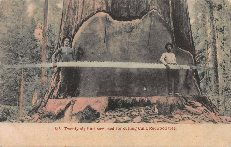Twenty Six Foot Saw and Redwood Tree, Hand Colored Postcard, Used in 1908