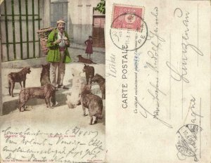 turkey, CONSTANTINOPLE, Street Dogs, Chiens de Rue (1905) Max Fruchtermann 1521