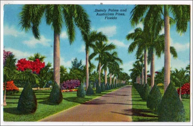 Stately Palms & Australian Pines, Florida